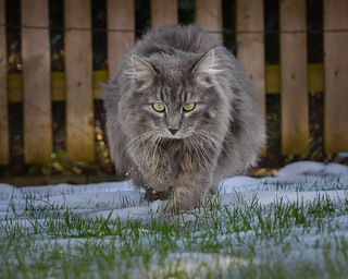 The fluffball on ice and snow