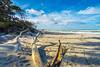 Ostsee  (24) (berndtolksdorf1) Tags: deutschland mecklenburgvorpommern ostsee dars weststrand strand bäume trees himmel sky sand outdoor