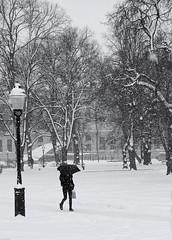 Park walk (daniel.gogberg) Tags: winter snow snö sony sonyrx100 rx rx100 bw blackwhite blackandwhite monochrome park sweden sverige sv svartvitt