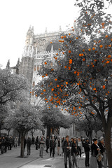 spring is in the air (pauleß) Tags: sevilla