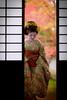 Maiko_20171120_12_11 (Maiko & Geiko) Tags: myokakuji temple fukuno kyoto maiko 20171120 舞妓 妙覚寺 ふく乃 京都 宮川町 河よ志 miyagawacho kawayoshi mait