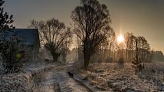 Winter landscape with dog (peterpj) Tags: polen polska landscape sony a6300 sigma 3014 colorefexpro4 winter zima sundaylights