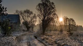 Winter landscape with dog