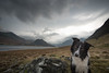 2/52 Paddy's Patch (JJFET) Tags: 2 52 weeks for dogs paddy border collie sheepdog dog mountain mountains hills crummock water lake district