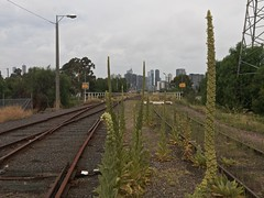 West Melbourne, Victoria, Australia, 2018-01-20 16:31:23 (s2art) Tags: gestural iphone lofi melbourne victoira australia urban urbanlandscapes urbanlandscape urbannature victoria australiannewtopographics trains rails brige bridge nature cbd plants pylon pylons auspctaggedpc3003 pc3003 westmelbpc3003 rusted rustedrails edgelands newtopographics summer summerinmelbourne summerinaustralia summerinthesouthernhemisphere signs downtown weeds regrowth