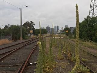 West Melbourne, Victoria, Australia, 2018-01-20 16:31:23
