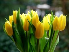 Danke ❤ (BrigitteE1) Tags: danke thanks tulpen tulips blumen flowers