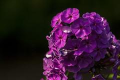 purple in the dark