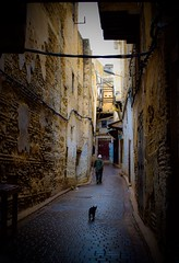 In the Médina (kimnnn) Tags: medina fes africa travel old architecture local cat morocco
