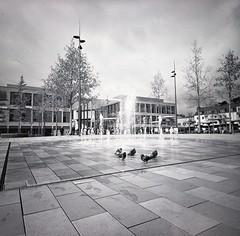 Hanau (Alice_argentique) Tags: filmisnotdead filmisalive streetphotography filmcamera nofilter blackandwhitephotography lomography lca120 ilford400xp2 pigeon