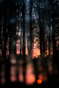 Awakening (Wizmatt) Tags: woodland tree branches forest environment ancient spring sunset sunrise colours double exposure camera abstract impression nature photograph photography canon 70d bokeh sihloutte silhouette