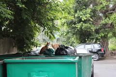 IMG_5884 (yass AH) Tags: lebanon beirut screamforbeirut cats city pollution trees nature globalwarming heat summer