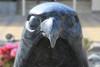 Falcon (Pi-F) Tags: emirats abudhabi moyenorient faucon statue marbre oiseau tête bec hopital