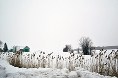 Winter Song (emerge13) Tags: cheminsainthenrimascoucheqc mascouchequébeccanada fermette country snow winter white blanc neige rural fields trees arbres nature nieve champs farmhouse wintertextures