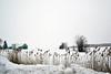 Winter Song (emerge13) Tags: cheminsainthenrimascoucheqc mascouchequébeccanada fermette country snow winter white blanc neige rural fields trees arbres nature nieve champs farmhouse wintertextures