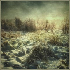 Winter landscape. (odinvadim) Tags: textured winter iphoneart iphone iphoneography distressedfx iphoneonly forest evening painterlymobileart snapseed specialist sunset textures travel frost artist painterly landscape