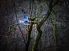 Movement - Bewegung (Vera Arnold) Tags: vogel bird trees bäume woodland wald fischreiher flug flight heron blury verwischt movement bewegung landscape landschaft