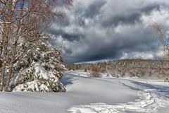 Hiver à la Féclaz  (1 350 m) - Savoie (gerardcarron) Tags: 1022 arbres canon80d ciel cloud feclaz france hiver landscape massifbauges montagne mountains nature neige nuages paysage savoie sky snow soleil sun winter ski de fond