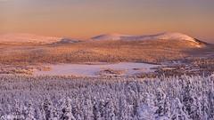 Last light - Lapland (Captures.ch) Tags: aufnahme baum himmel hügel landschaft nationalpark wald winter capture hills landscape sky snow tree valley finland äkäslompolo lapland yllas abend abenddämmerung sonneuntergang dusk evening sunset kuer