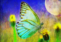 A world of beauty and pain (jackaloha2-computer problems-blah) Tags: butterfly moon impressionism flower colorful valentinesday
