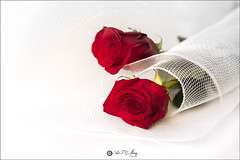8/52 Dos rosas (Art.Mary) Tags: fleur flower rosas roses canon macro rojo rouge red dos deux two 52semanas