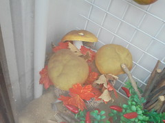 282 (en-ri) Tags: funghetti fall autunno autumn sony sonysti foglie vetrina arancione leaves peperoncini rosso marrone