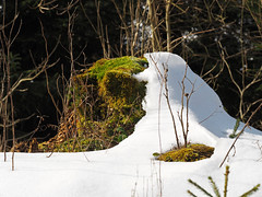 Süd und Nord (michaelmueller410) Tags: snow moss trunk tree baum baumstumpf schnee eis bäume äste harz winter cold kalt sonne sunny