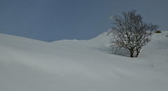 Guzet-Neige (Michel Seguret Thanks for 14.8 M views !!!) Tags: france pyrenees ariege montagne montana montagna berg moutain hiver invierno inverno winter michelseguret d800 pro arbre tree arbol baum schnee snow neige nieve saison season
