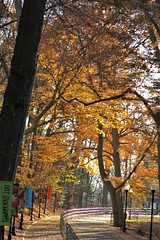 MD Zoo ~ golden walk (karma (Karen)) Tags: baltimore maryland marylandzoo paths fences trees fallcolor banners htmt