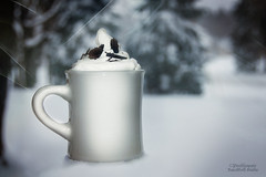 At this Season of the Year (Peeblespair) Tags: seasons stilllife winter cups snow cozy warmdrink evergreens ebwhite cold warm peeblespair photography