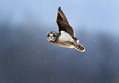 Shorty In Flight (Gary Fairhead) Tags: