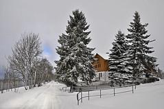 (Uli He - Fotofee) Tags: ulrike ulrikehe uli ulihe ulrikehergert hergert nikon nikond90 fotofee gersfeld rhön hessischerhön hessen winter schnee januar nebel pferd entlaufen ausgebüchst tierpark bäume wolken simmelsberg skipiste