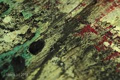 Speckled (Yberle.Foto) Tags: speckled macro macromondays