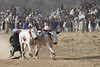 IMG_5738 (Jamil-Akhtar) Tags: canon 50d tamron tamron200400f56 sports action race racing bullrace bullracing islamabad pakistan bull ox bullock
