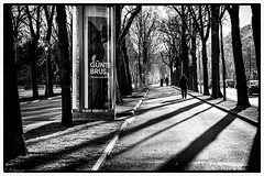 long shadows on the Ringstraße (No.I) (TheOtherPerspective78) Tags: light shadow blackandwhite black white sun sunny sunlight winter trees boulevard avenue ringstrase ring wien vienna bw city cityscape street urban pedestrian sidewalk people theotherperspective78 canon eosm6