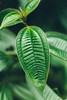 () (Photoparenthesis) () (julien.ginefri) Tags: argentina argentine america latinamerica southamerica iguazu iguaçu brasil brazil