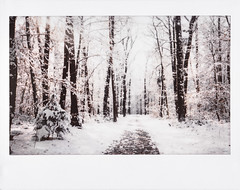05/02/2018 (the girl who made it on her own) Tags: ronakeller rona instantfilm instaxwide fujifilminstaxwide300 instax ronasfilmdiary filmdiary filmmemories film winterwonderland winter wintermemories february happyheart forestpath snow snowyforestpath snowfall whiteworld