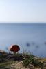 Kärbseseen (Jaan Keinaste) Tags: pentax k3 pentaxk3 eesti estonia loodus nature laulasmaa seen mushroom fungus meri sea kärbseseen amanita