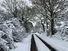 Tracks in the snow (Heaven`s Gate (John)) Tags: snow road tracks tree trees winter solihull england farm lane johndalkin heavensgatejohn braggs 25faves