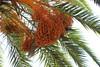 IMG_0847 (burhansakir) Tags: adana feke kuş palmiye karinca hayat doğa misir keyf dari masum köy akkaya kozan