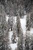 PIO_0669m (MILESI FEDERICO) Tags: milesi milesifederico montagna montagne mountain italia italy iamnikon inmontagna inverno ice wild winter piemonte piedmont visitpiedmont valsusa valliolimpiche valdisusa valledisusa sauzedicesana cittàmetropolitanaditorino freddo nikon nikond7100 nital natura nature nat neve nevicata snow 2018 gennaio alpi alpicozie altavallesusa altavaldisusa d7100 dettagli details paesaggio panorama landscape alberi albero ngc ngg europa europe explorer
