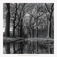 #reflections (Fr@nk ) Tags: bw blackandwhite square europe duotone monochrome 120 6x6 canon nikon sony hasselblad mamiya zenzabronica adamansell anseladams rollei reflection water rain sky clouds trees shrubs landscape scenery frnk frankvandongen googl7uchtr krumpaaf mrtungsten62 interesting interestingness