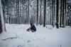 HM2A7527 (ax.stoll) Tags: feldberg frankfurt taunus mountain forest snow winter winterwonderland outdoor nature dog hovawart trees street wanderlust travel