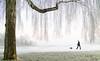 Stockholm, January 10, 2018 (Ulf Bodin) Tags: canonefm222stm sverige birch winter rime walking outdoor dimma fog tree mist canoneosm3 träd dog vinter stockholm rimfrost sweden djurgården hund stockholmslän se
