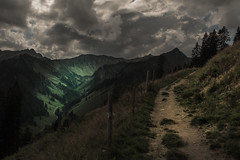 In the Mood (Netsrak) Tags: europa europe baum bäume wald gebirge berg berge kleinwalsertal österreich at riezlern hirschegg mittelberg