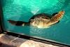 PC230088 (photos-by-sherm) Tags: living coast discovery center aquarium science san diego ca california winter environmental preserve zoo educational birds sea creatures