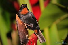 Le temps d' une pose!!! (PBLSHOOTX) Tags: fortdefrance garden letempsdunepose madinina martinique oiseau pblshootx jardindebalata travel world