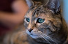 Catastrophic (Danswan) Tags: cats pets domestic domesticanimal shallow depthoffield bokeh whiskers fur portrait animals animaleyes nikon d810 stare primelens 50mm puss wildlife feline tamed close closeup eyes