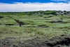 Island-5083 (clickraa) Tags: island nachlese iceland highlights reykjanes