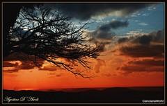 Tramonto rosso di Gennaio-2018 (agostinodascoli) Tags: tramonto sunset paesaggi nature texture agostinodascoli cianciana sicilia rosso cielo rami albero nikon nikkor landscape